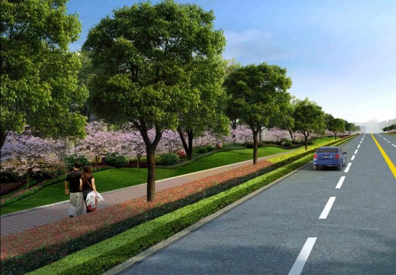 道路绿化 (1)
