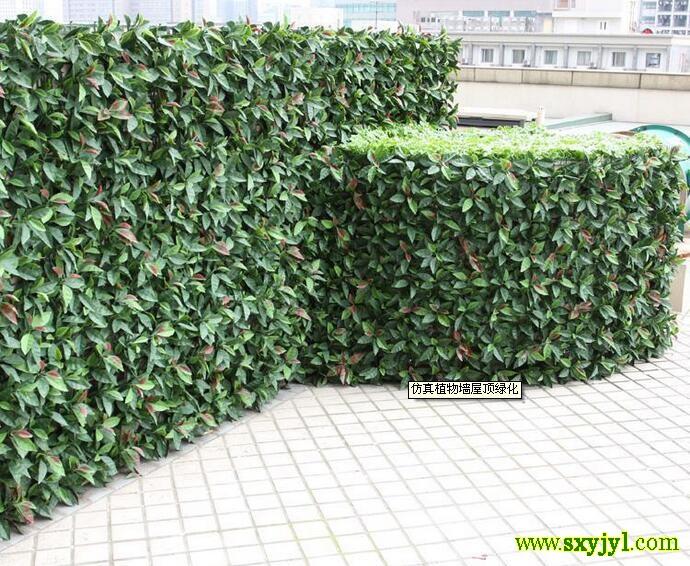 植物墙13709183534立体绿化是指以建筑物和构筑物为载体,以植物材料为