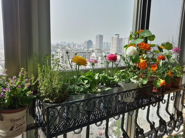 家庭阳台种菜几种绿化形式