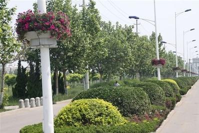 路灯杆绿化