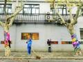 上海:绿化树毛衣被脱 绿化部门称与周边景观不协调