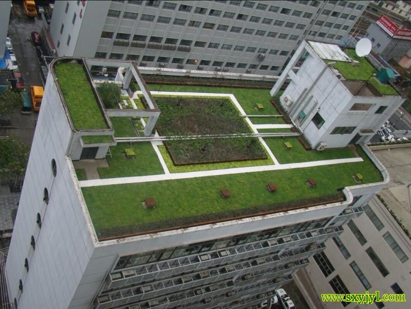 屋顶立体绿化改造 (1)