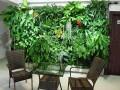植物墙立体绿化施工 (25)