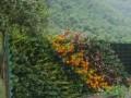 金丝峡路面植物墙 (2)