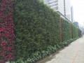 襄阳植物墙 (2)