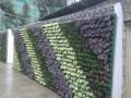 延安植物墙 (2)